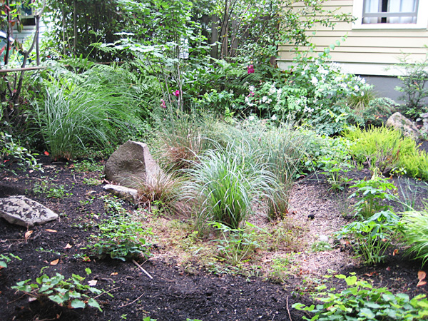 an attractive rain garden captures stormwater runoff and provides habitat for beneficial wildlife