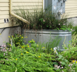 stormwater planter at EMSWCD