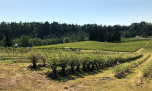 visit the Working Farmland Protection Program section