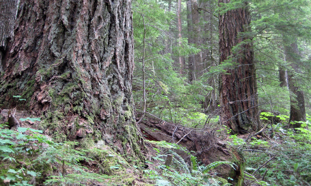 a well-established forest, green with healthy understory growth