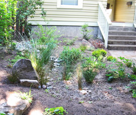This rain garden handles stormwater -and- frames the front walkway nicely!