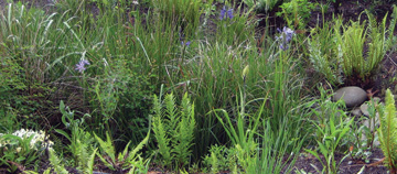 check out our gallery pages to see local examples of rain gardens